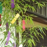 七夕の笹と竹との違いは?どこで売ってるの?処分方法は?