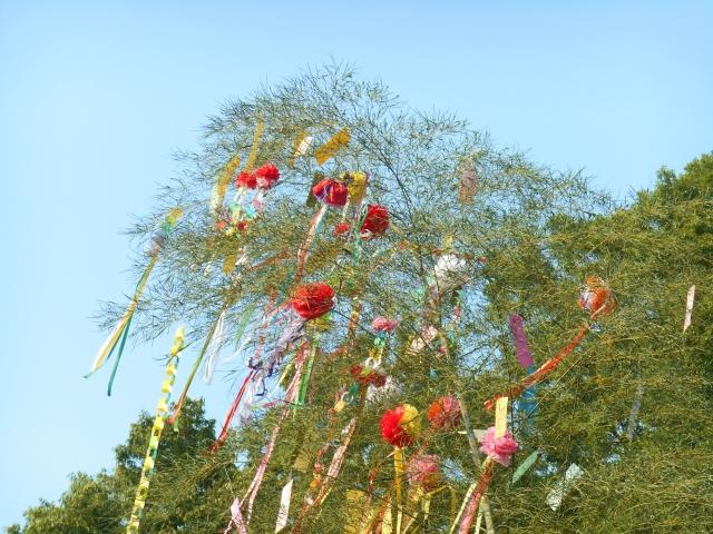 七夕の竹と笹