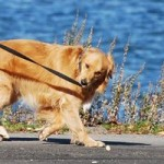 犬の散歩に夏のアスファルトは危険。おすすめの時間と暑さ対策