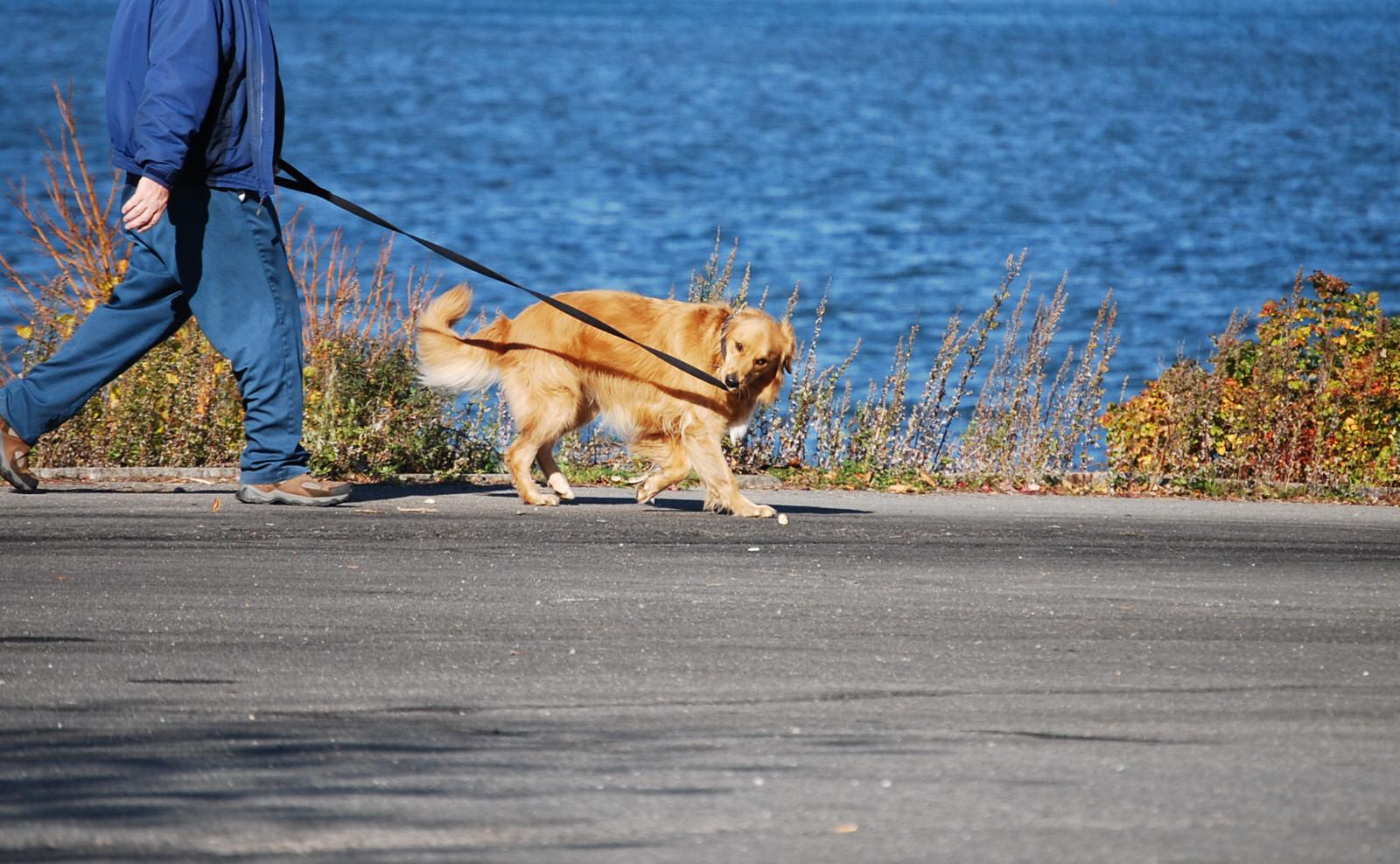 犬の夏の散歩の時間