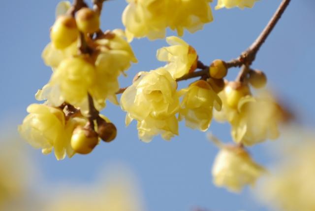 寒中見舞いの花