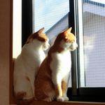 2階の窓の外側を安全に掃除!窓ふきの跡が残らない大掃除の簡単なやり方