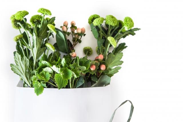 フラワーアレンジメントに使う葉物の種類