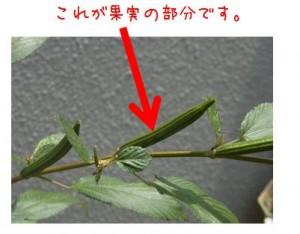 moroheiyanokazitu
