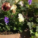 寄せ植えの作り方の簡単なやり方。花いっぱいの鉢やテラコッタを玄関に