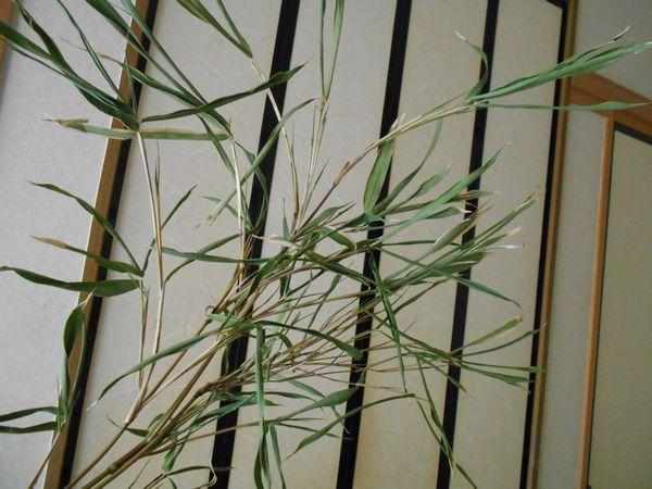笹の保存方法