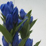 花 9月に咲くものは?秋っぽくて日本らしいものを紹介