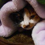 猫の冬用ベッドを手作りで寒さ対策。お留守番にもおすすめ