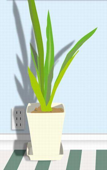 暗い玄関の観葉植物