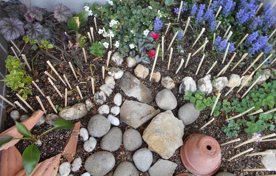 ネコ対策の花壇