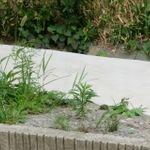 草むしりのコツ。庭の除草を簡単にする方法