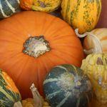 ハロウィンかぼちゃ腐る
