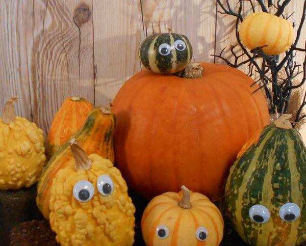 おもちゃかぼちゃたち
