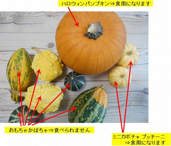 おもちゃかぼちゃ食用