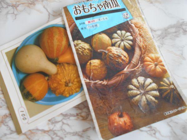おもちゃかぼちゃの種袋