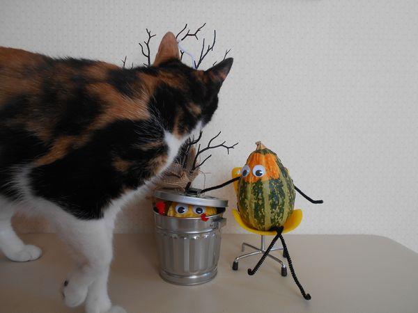 おもちゃかぼちゃと猫3