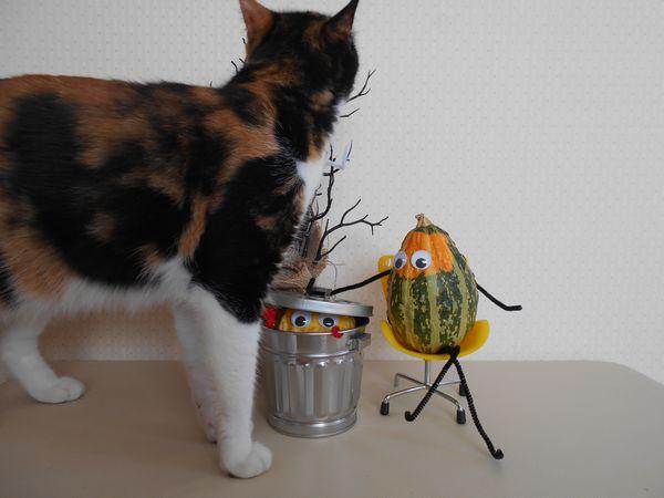 おもちゃかぼちゃと猫4