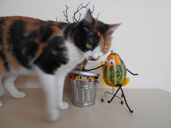 おもちゃかぼちゃと猫5