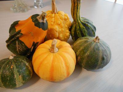 フラワーアレンジ用かぼちゃ