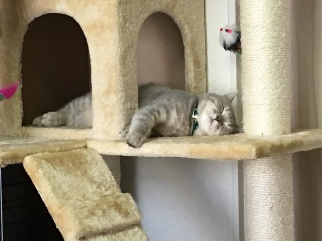 シニア猫用キャットタワー