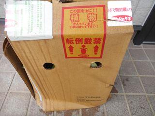 サンパチェンスが送られてきた箱