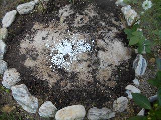 花壇に元肥を混ぜる