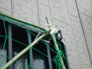 緑のカーテンを窓格子に固定