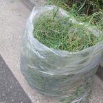 草むしりした後の草