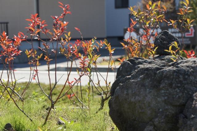 雑草のある庭