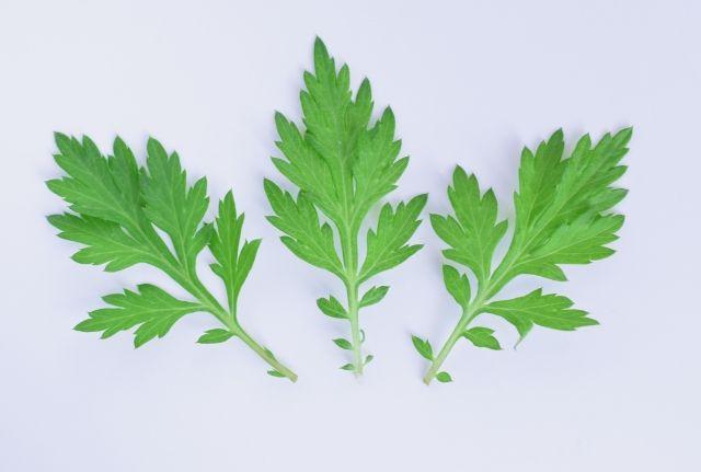 よもぎの葉