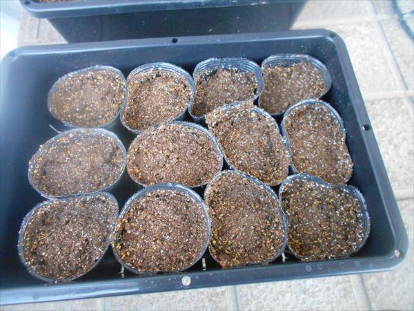 ペチュニアの挿し木用の土