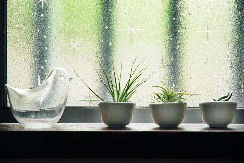ガラスと観葉植物