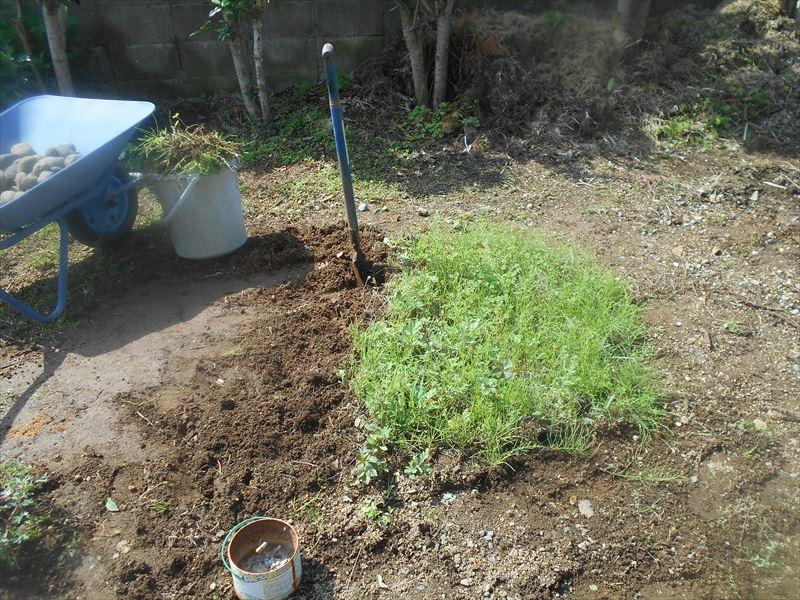 根っこの太い雑草の除草