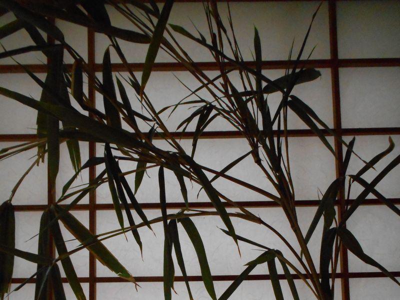 七夕の笹の葉の保存方法