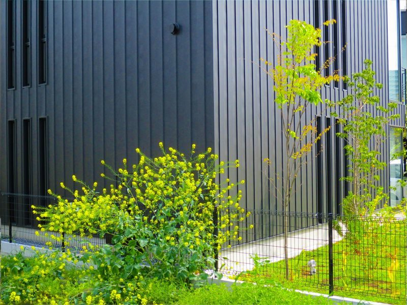 隣の家の庭木