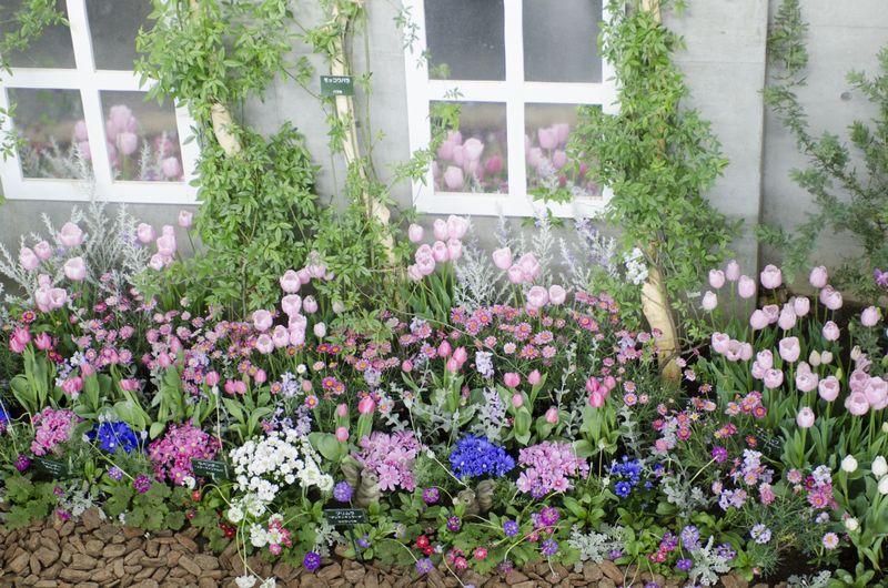 チューリップと春の花の寄せ植え