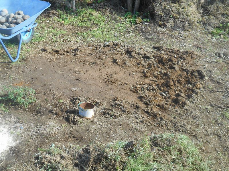 雑草の駆除が終わったところ